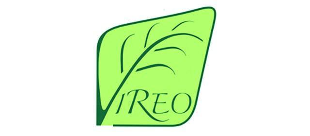 vireo_l
